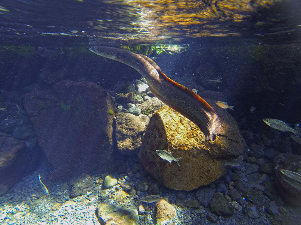 Photo de la faune aquatique à Vaima
